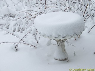 Birdbath in the Snow