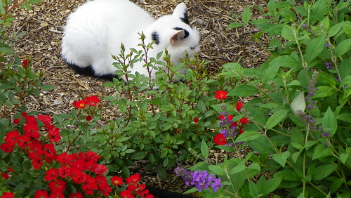 Hiding among the Flowers