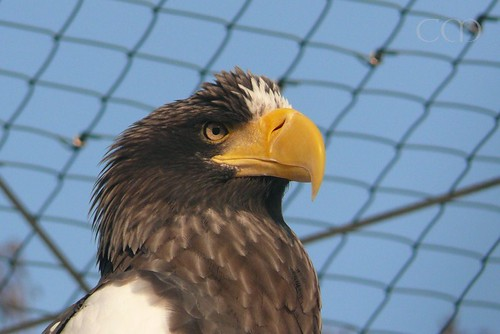 Love their giant beak.. :)