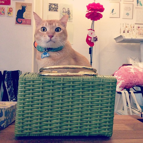 Jack is guarding a vintage green wicker handbag with shiny gold handles. Circa 1960. :)