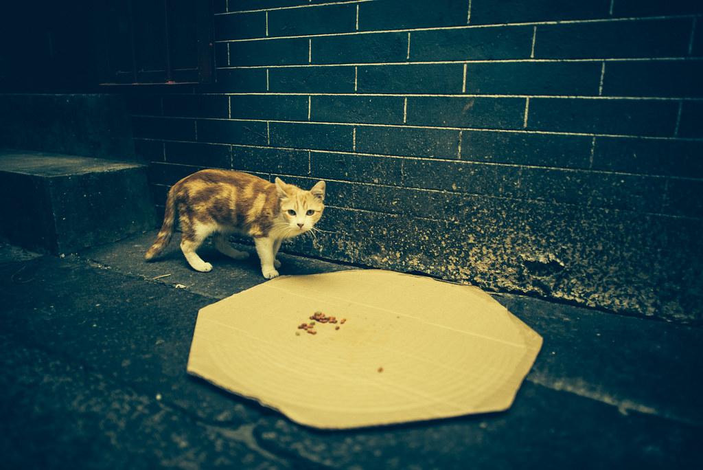 Temple Street Kitty