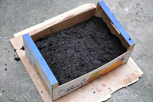 Crate with soil