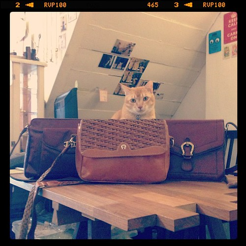Jack approves of the new vintage handbags in the shop!