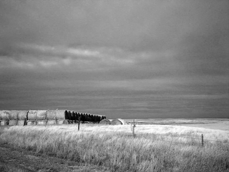 hay bales on Alberta prairie