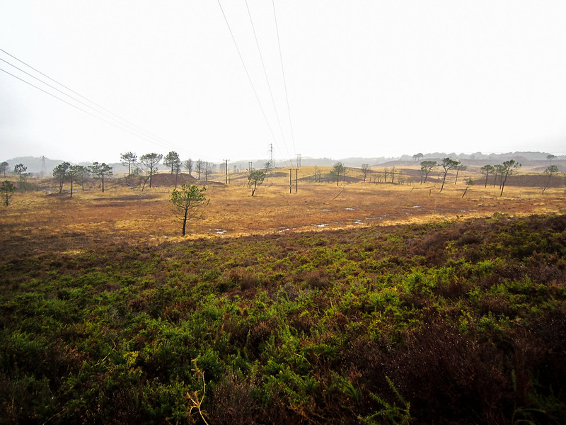Upton Heath in the Rain