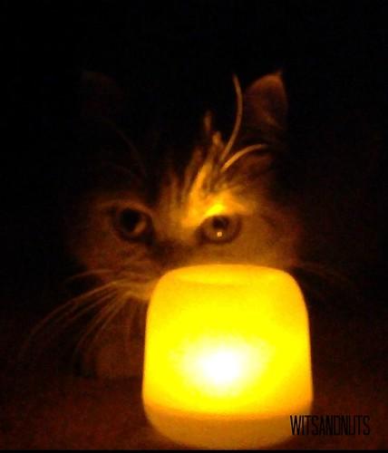 Perdita at 2013 Earth Hour
