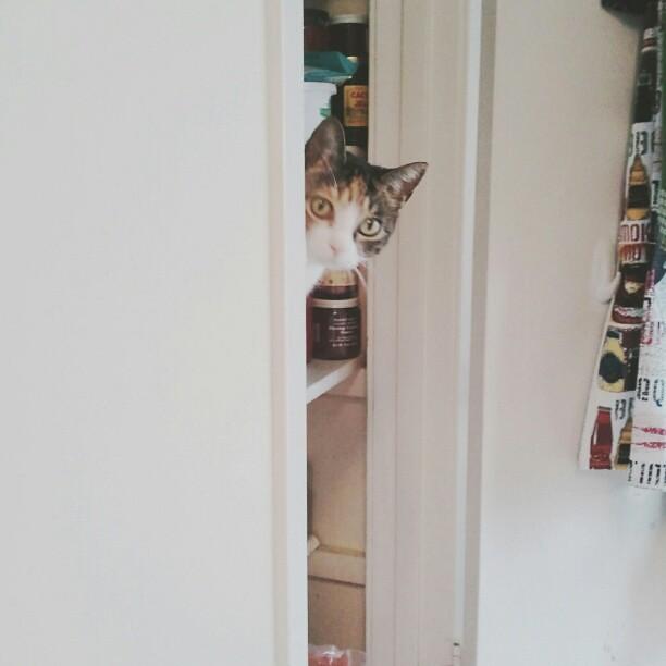 Oh, hi Pandora. #catsincupboards #catsofinstagram