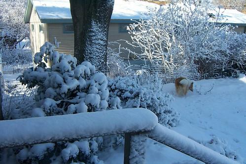 Snowmore0016
