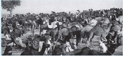 NCERT Class XII Sociology Chapter 4 - The Market as a Social Institution