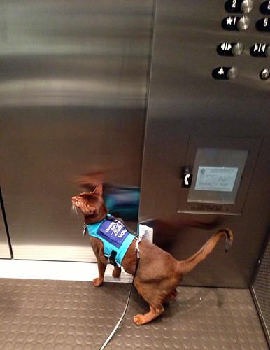 jake-elevatorIMG_0721