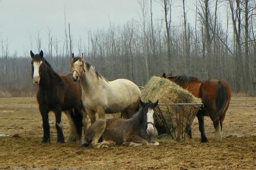 pasture pals