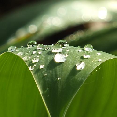 Slipsliding in the rain by Patricia Manhire