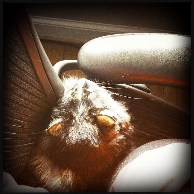 seat hog