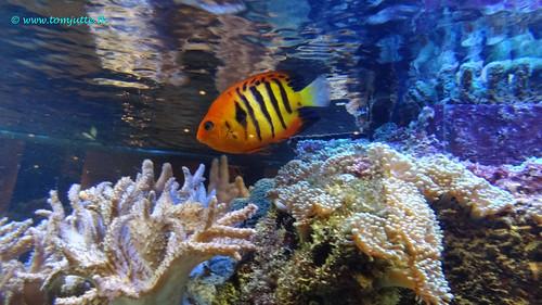Fish in aquarium, Zeist, Netherlands - 1190