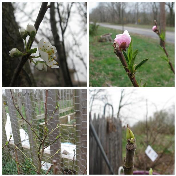 Spring Potential