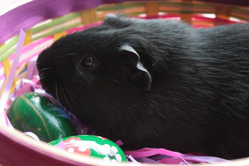 Easter Bunny? Easter Piggie!