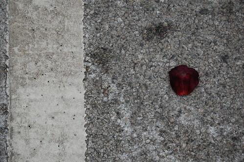 a lone rose petal