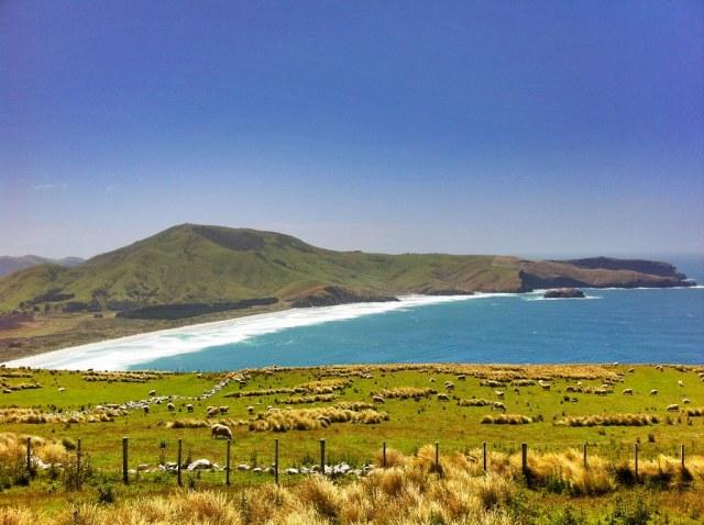 Fd Otago Peninsula