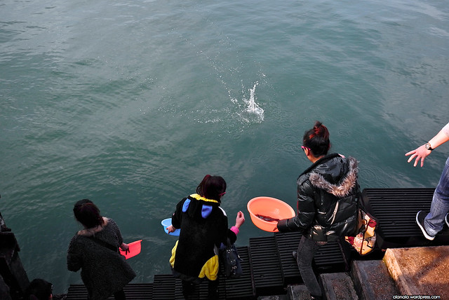 Sea animal release