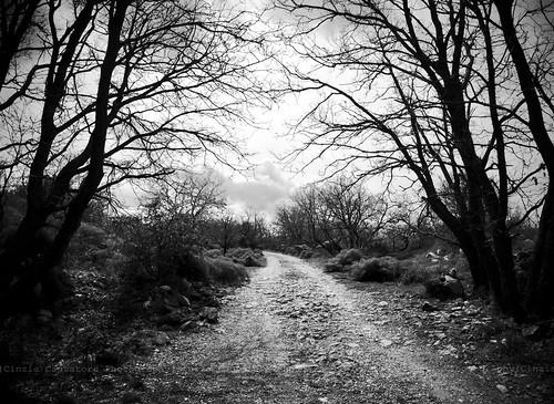 """""""Sentirsi come un lungo ramo senza fiori"""" by [Piccola_iena]"""
