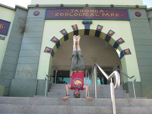 24. taronga zoo headstand