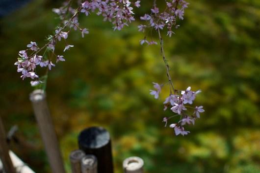 Japanese Garden -Portland
