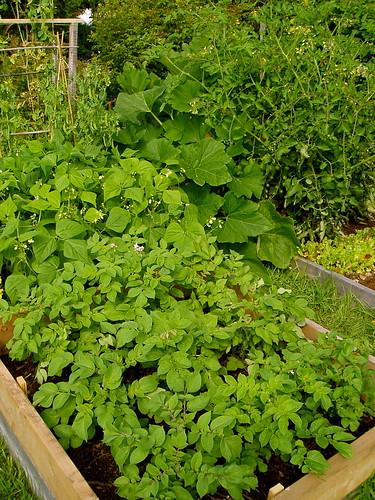 2008 Garden
