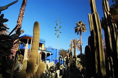 YSL Gardens 1