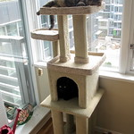 Sleeping in their new tower
