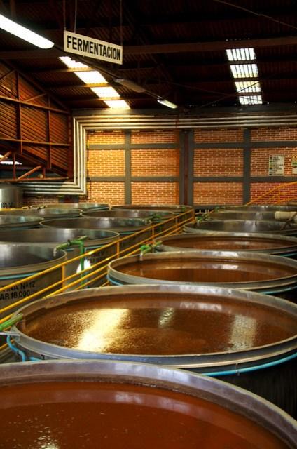 Tequila en fermentacion