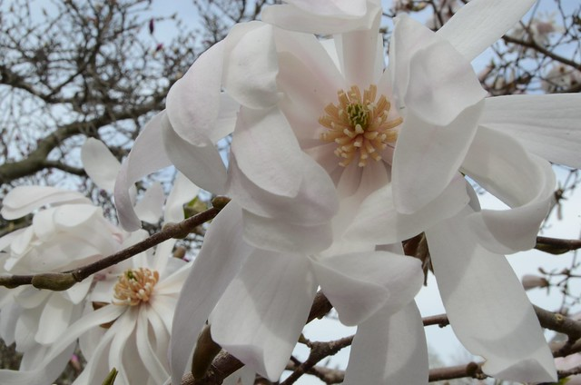 2013-4-20 spring 130