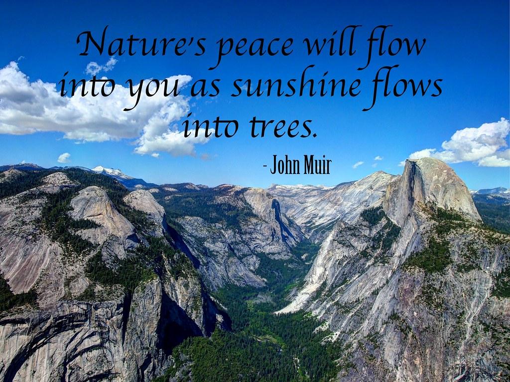 Yellowstone National Park Big Trees