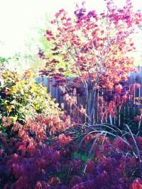 My Colorful Backyard   Flickr - Photo Sharing!