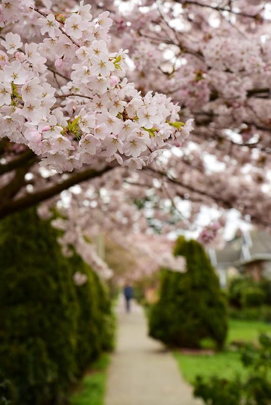 Neighborhood Blossoms