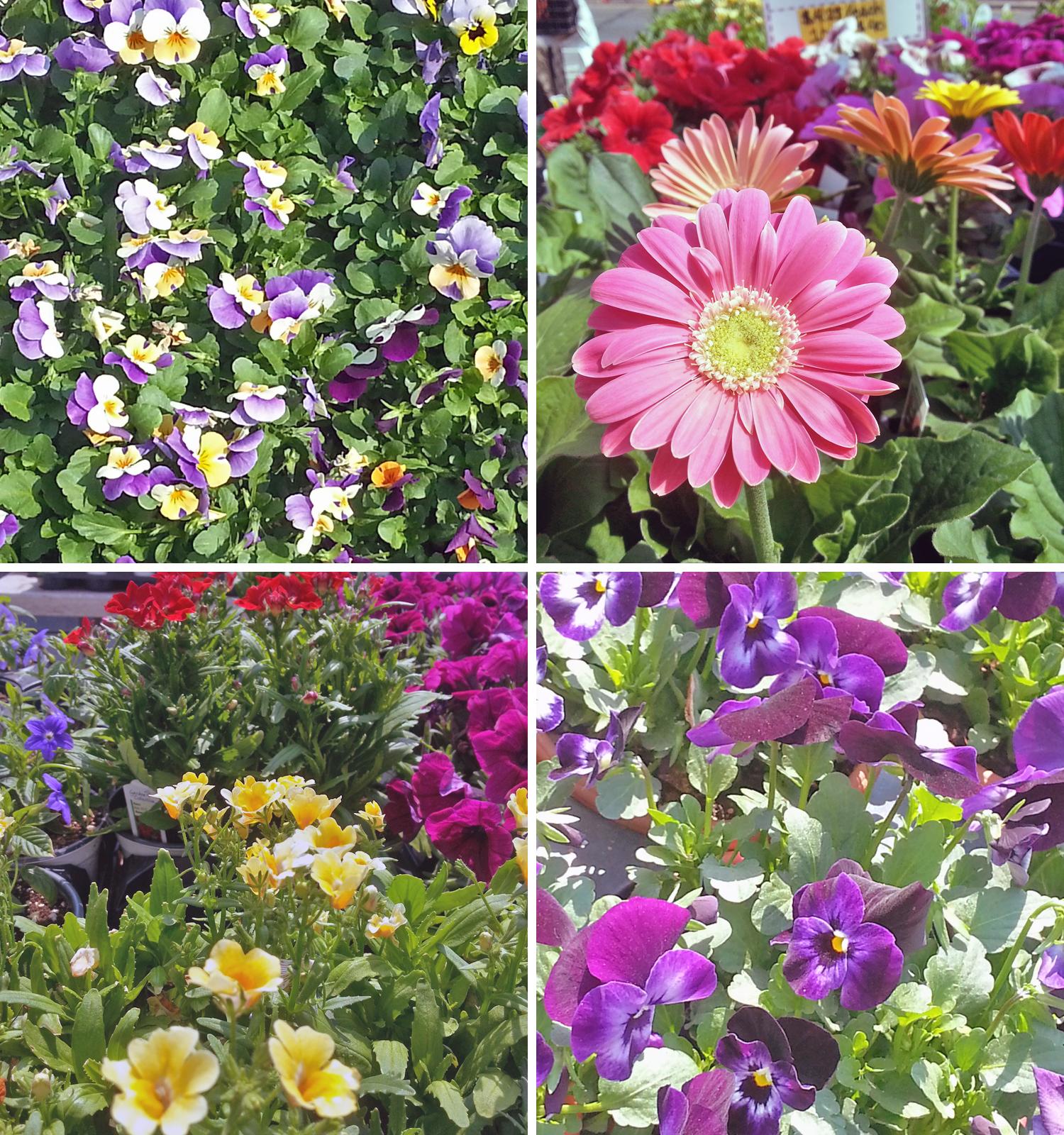 usq-flowers-4