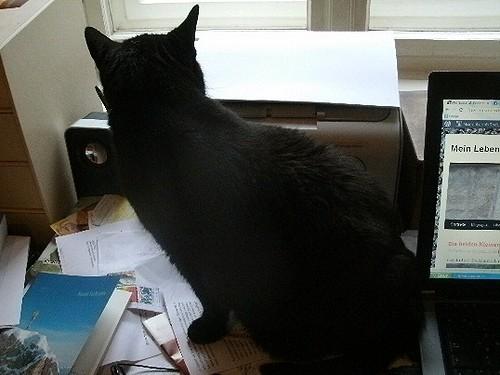 Katze auf Schreibtisch 1