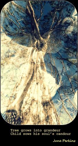 treeandboy