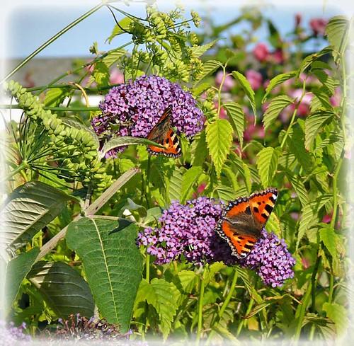 Summer-in-the-garden by Zo Nicholas
