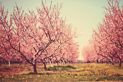 springtime dream