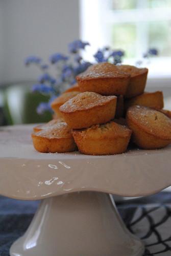 madeleine muffin