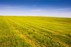 Big #Dorset field