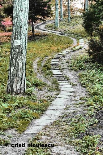 Path by cristiniculescu