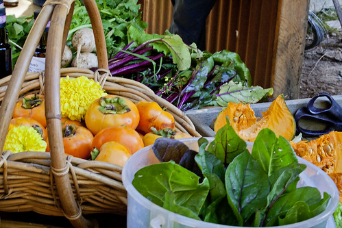 Photo of Farm Stand produce. Basket filled with persimmon and marigolds, bucket of greens, cut pumpkin and chard.