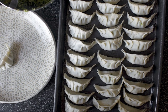 potstickers, all lined up