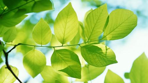 Propuesta: ¡Vive un fin de semana verde!