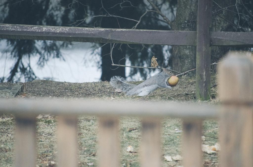 L'écureuil 4