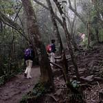12 Viajefilos en Sri Lanka. Nuwara Eliya 27