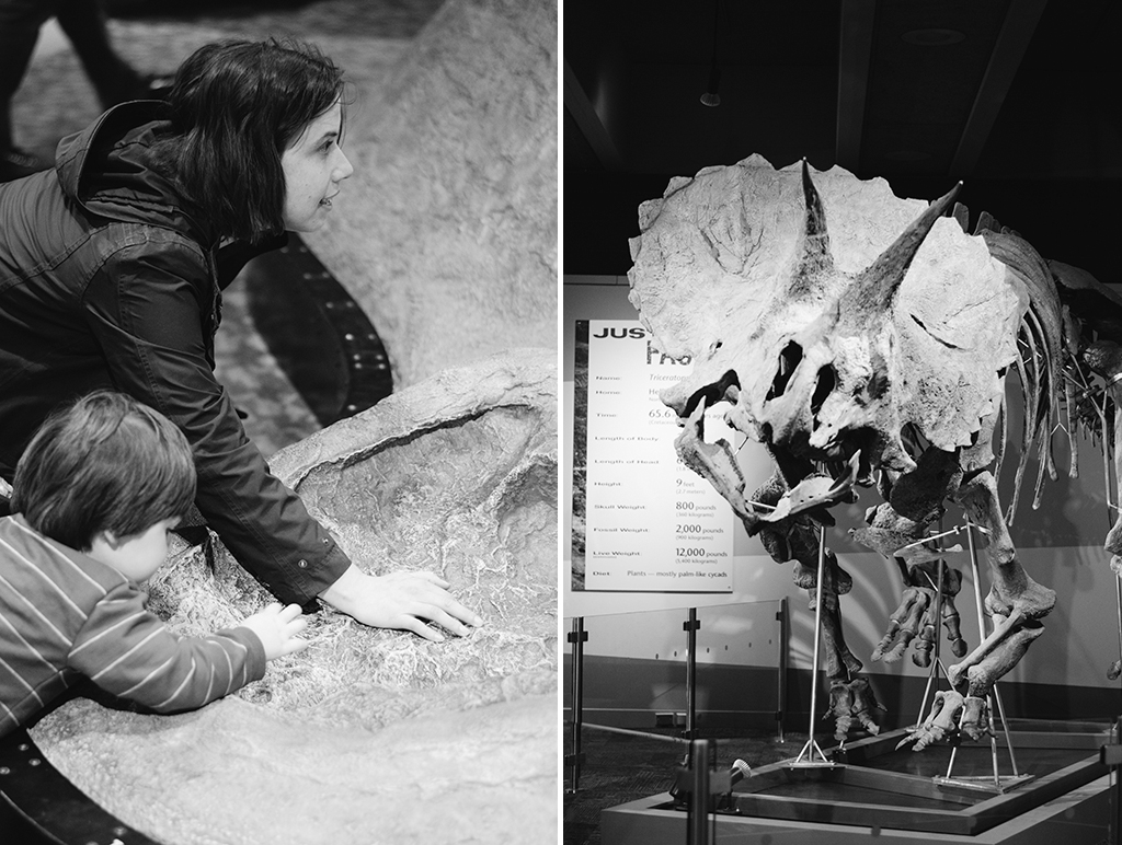 dinosaur exhibit collage