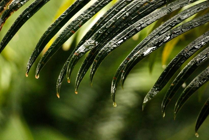 rejs i regnsæsonen og spar penge