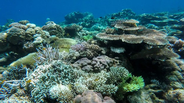 Coral forest. Reef 5